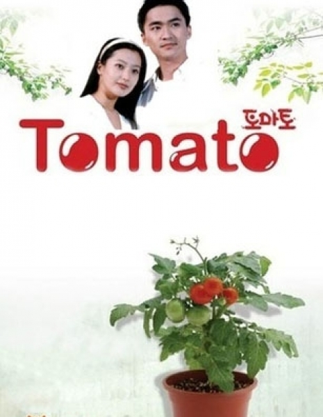 Томато / Tomato / 토마토 / To-ma-to